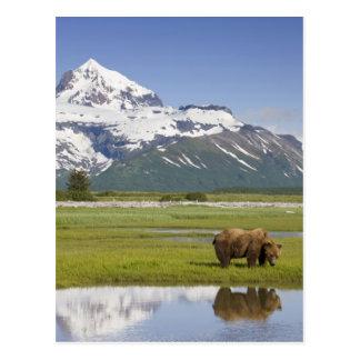 Los E E U U Alaska parque nacional de Katmai o Postales