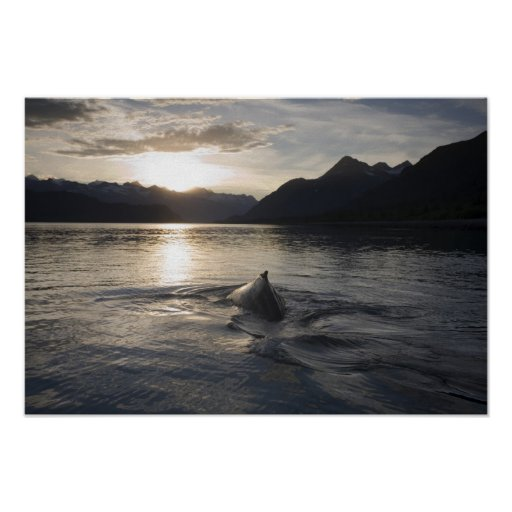 Los E.E.U.U., Alaska, parque nacional del Glacier  Posters