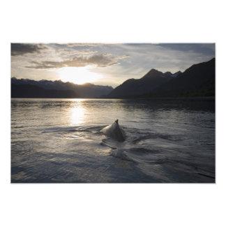 Los E E U U Alaska parque nacional del Glacier Fotografia