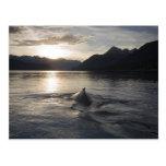Los E.E.U.U., Alaska, parque nacional del Glacier  Tarjeta Postal