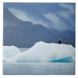 Los E.E.U.U., Alaska, paso interior. Águila calva  Azulejo Cuadrado Grande