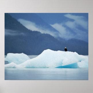 Los E.E.U.U., Alaska, paso interior. Águila calva  Póster