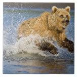 LOS E.E.U.U. Alaska. Pesca costera del oso de Brow Azulejo Cuadrado Grande