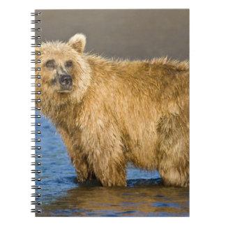 LOS E.E.U.U. Alaska. Pesca costera del oso de Brow Libretas