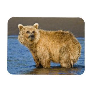 LOS E.E.U.U. Alaska. Pesca costera del oso de Brow Imán Flexible