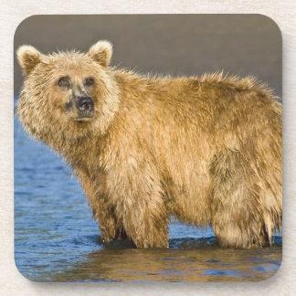 LOS E E U U Alaska Pesca costera del oso de Brow Posavasos