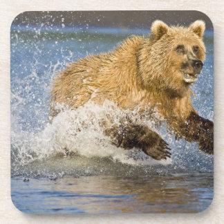 LOS E E U U Alaska Pesca costera del oso de Brow Posavaso