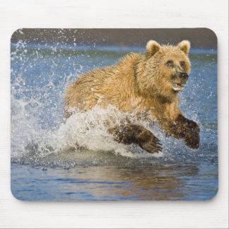 LOS E.E.U.U. Alaska. Pesca costera del oso de Brow Alfombrilla De Raton