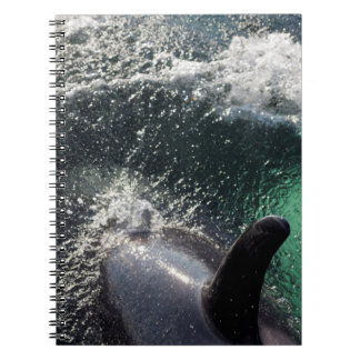 Los E.E.U.U., Alaska, primaveras de Tenakee. Orca Cuaderno