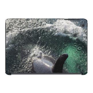 Los E.E.U.U., Alaska, primaveras de Tenakee. Orca Fundas De iPad Mini