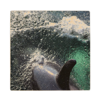 Los E.E.U.U., Alaska, primaveras de Tenakee. Orca Posavasos De Arce