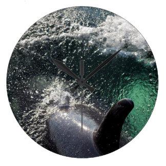 Los E.E.U.U., Alaska, primaveras de Tenakee. Orca Reloj Redondo Grande