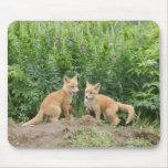 Los E.E.U.U., Alaska, río de McNeil. Fox rojo. 2 Alfombrillas De Ratón
