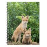 Los E.E.U.U., Alaska, río de McNeil. Fox rojo. 5 Notebook