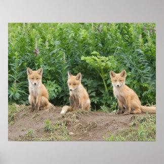 Los E.E.U.U., Alaska, río de McNeil. Fox. rojo Póster