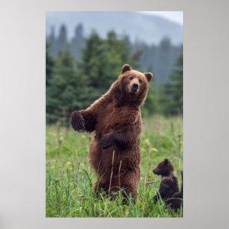 Los E.E.U.U., Alaska suroriental, oso de Brown y Póster