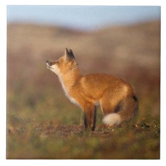 Los E.E.U.U., Alaska, zorro rojo, colores de la tu Azulejo Cuadrado Grande