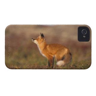 Los E.E.U.U., Alaska, zorro rojo, colores de la tu iPhone 4 Funda