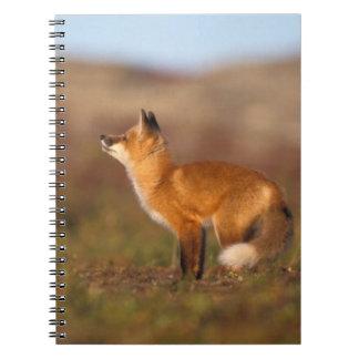 Los E.E.U.U., Alaska, zorro rojo, colores de la tu Libro De Apuntes Con Espiral
