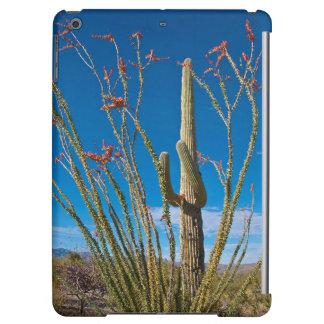 Los E.E.U.U., Arizona. Cactus en parque nacional
