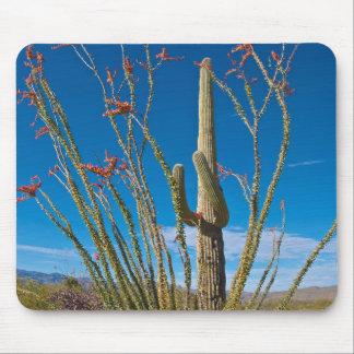 Los E.E.U.U., Arizona. Cactus en parque nacional Alfombrillas De Raton