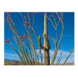 Los E.E.U.U., Arizona. Cactus en parque nacional Postal