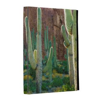 Los E.E.U.U., Arizona. Campo del cactus del
