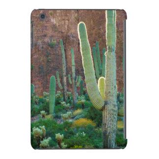 Los E.E.U.U., Arizona. Campo del cactus del Funda De iPad Mini