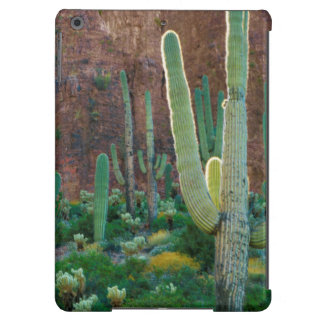 Los E.E.U.U., Arizona. Campo del cactus del Funda Para iPad Air