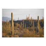 Los E.E.U.U., Arizona, desierto de Sonoran, Ajo, A Arte Con Fotos