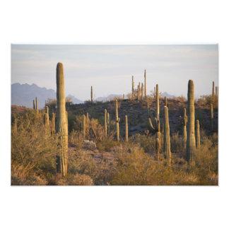 Los E E U U Arizona desierto de Sonoran Ajo A Arte Con Fotos