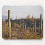 Los E.E.U.U., Arizona, desierto de Sonoran, Ajo, A Alfombrillas De Ratones