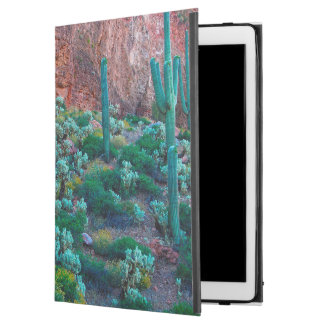 Los E.E.U.U., Arizona. Flora del desierto