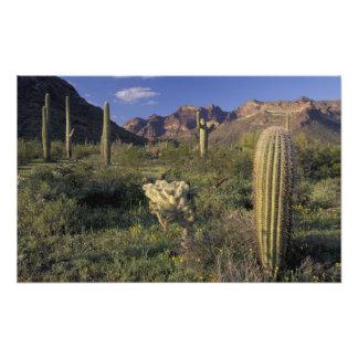 Los E.E.U.U., Arizona, monumento nacional del tubo Cojinete