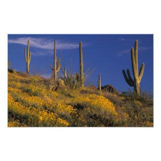 Los E.E.U.U., Arizona, nacional 2 del cactus del t Fotografía