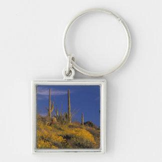 Los E E U U Arizona nacional 2 del cactus del t Llaveros