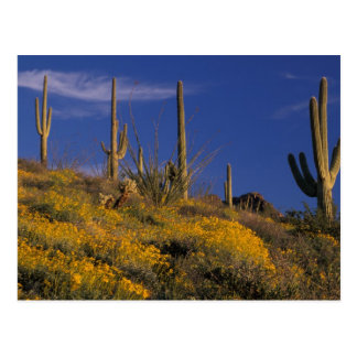 Los E.E.U.U., Arizona, nacional 2 del cactus del Postal