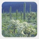 Los E.E.U.U., Arizona, nacional del cactus del Colcomanias Cuadradases