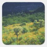 Los E.E.U.U., Arizona, nacional del cactus del Pegatinas Cuadradases Personalizadas