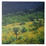 Los E.E.U.U., Arizona, nacional del cactus del tub Teja Cerámica
