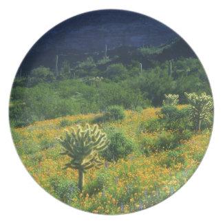 Los E.E.U.U., Arizona, nacional del cactus del tub Plato De Cena