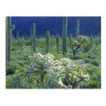 Los E.E.U.U., Arizona, nacional del cactus del tub Tarjetas Postales