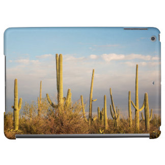 Los E.E.U.U., Arizona, parque nacional de Saguaro,