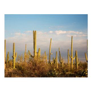 Los E.E.U.U., Arizona, parque nacional de Saguaro, Tarjetas Postales