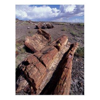 Los E.E.U.U., Arizona, parque nacional del bosque Postal