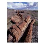 Los E.E.U.U., Arizona, parque nacional del bosque  Tarjetas Postales