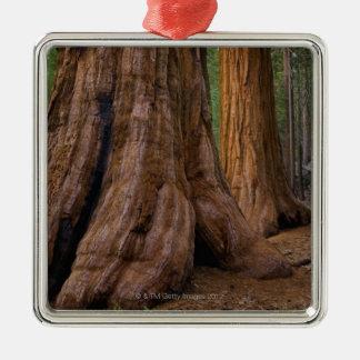 Los E.E.U.U., California, árbol de la secoya Adorno Navideño Cuadrado De Metal