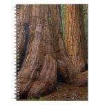 Los E.E.U.U., California, árbol de la secoya gigan Libro De Apuntes Con Espiral