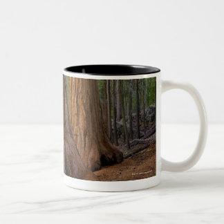 Los E.E.U.U., California, árbol de la secoya Taza De Dos Tonos