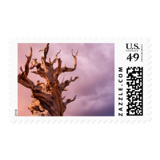 Los E.E.U.U., California, bosque del Estado 9 de Sello